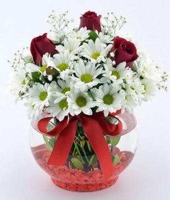 Fanusta 3 Gül ve Papatya  Amasya internetten çiçek satışı