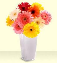 Amasya 14 şubat sevgililer günü çiçek  gerberalardan mika yada cam vazo tanzim
