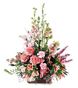 Amasya ucuz çiçek gönder  mevsim çiçeklerinden özel