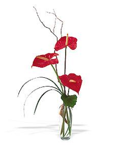 Amasya çiçek siparişi sitesi  cam yada mika Vazoda 3 adet  antoryum