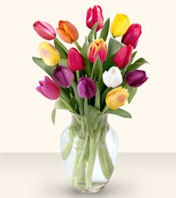 Amasya çiçekçiler  13 adet cam yada mika vazoda laleler