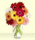 Amasya çiçek yolla , çiçek gönder , çiçekçi   cam yada mika vazoda 15 özel gerbera