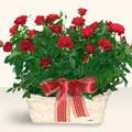 Amasya İnternetten çiçek siparişi  11 adet kirmizi gül sepette
