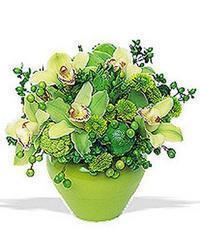 cam yada mika vazoda 5 adet orkide   Amasya online çiçekçi , çiçek siparişi