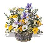 Amasya çiçek servisi , çiçekçi adresleri  karisik karma kir çiçegi sepeti
