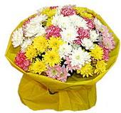 karisik renkte krizantemler  Amasya çiçek yolla