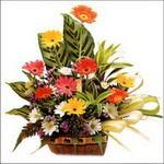 sepet içerisinde gerberalar   Amasya 14 şubat sevgililer günü çiçek