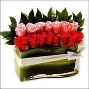 12 adet kirmizi gül ve cam   Amasya çiçekçi mağazası
