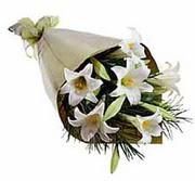 4 adet kazabllanka çiçegi   Amasya çiçek gönderme sitemiz güvenlidir