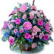 karisik mevsim kir çiçekleri  Amasya çiçek gönderme sitemiz güvenlidir