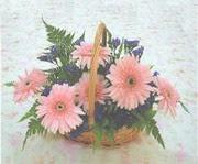 gerbera çiçeklerinde sepet   Amasya çiçek yolla