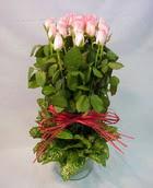 13 adet pembe gül silindirde   Amasya çiçek yolla