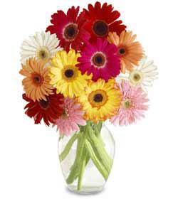 Amasya uluslararası çiçek gönderme  cam vazo içerisinde karisik gerbera çiçekleri