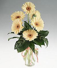 Amasya cicekciler , cicek siparisi  vazo içerisinde 11 adet gerbera çiçegi