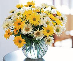 Amasya internetten çiçek satışı  cam vazo içerisinde 3 adet krizantem demeti