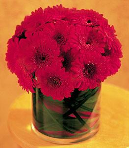 Amasya ucuz çiçek gönder  23 adet gerbera çiçegi sade ve sik cam içerisinde