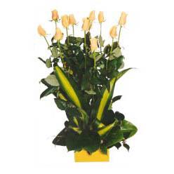 12 adet beyaz gül aranjmani  Amasya kaliteli taze ve ucuz çiçekler