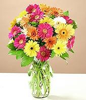 Amasya çiçek online çiçek siparişi  17 adet karisik gerbera