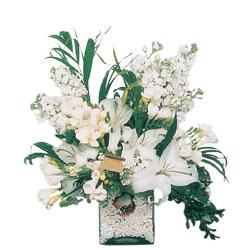Amasya internetten çiçek siparişi  sadece beyazlardan olusmus mevsim cam yada mika tanzim