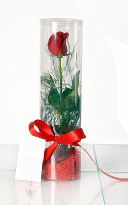 Amasya çiçek yolla  Silindir vazoda tek kirmizi gül