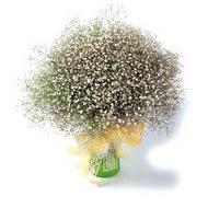 Amasya çiçek mağazası , çiçekçi adresleri  cam yada mika vazo içerisinde cipsofilya demeti
