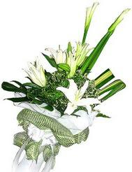 Amasya güvenli kaliteli hızlı çiçek  3 dal kazablanka çiçegi ve yesillikler
