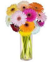 Amasya internetten çiçek siparişi  Farkli renklerde 15 adet gerbera çiçegi