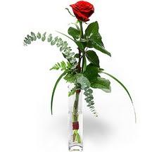 Amasya 14 şubat sevgililer günü çiçek  Sana deger veriyorum bir adet gül cam yada mika vazoda