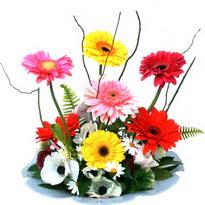 Amasya hediye çiçek yolla  camda gerbera ve mis kokulu kir çiçekleri