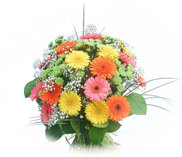 13 adet gerbera çiçegi buketi  Amasya online çiçek gönderme sipariş