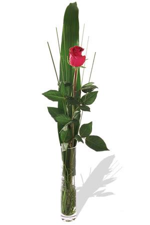 1 adet cam vazo içerisinde kirmizi gül  Amasya çiçek , çiçekçi , çiçekçilik