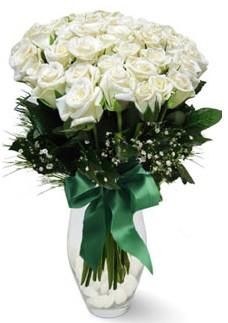 19 adet essiz kalitede beyaz gül  Amasya çiçekçiler