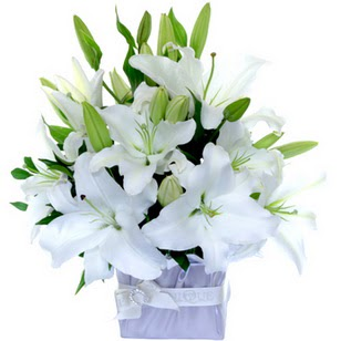 Amasya çiçek yolla  2 dal cazablanca vazo çiçeği