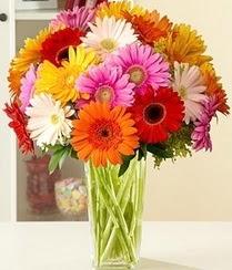 Amasya çiçek servisi , çiçekçi adresleri  15 adet gerbera çiçek vazosu
