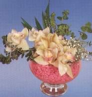 Amasya çiçek mağazası , çiçekçi adresleri  Dal orkide kalite bir hediye