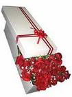 Amasya çiçekçi telefonları  11 adet 1.kalite magnum güller