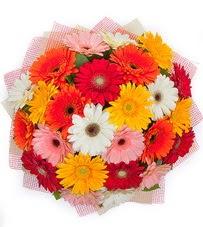 15 adet renkli gerbera buketi  Amasya yurtiçi ve yurtdışı çiçek siparişi