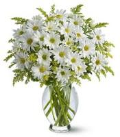 Vazo içerisinde beyaz krizantem çiçekleri  Amasya çiçekçi mağazası