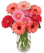 vazo içerisinde 13 adet gerbera çiçeği  Amasya çiçek siparişi sitesi