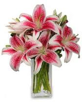 Vazo içerisinde 5 dal kazablanka çiçeği  Amasya cicekciler , cicek siparisi