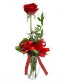 vazo içerisinde 1 adet kırmızı gül  Amasya çiçekçi telefonları