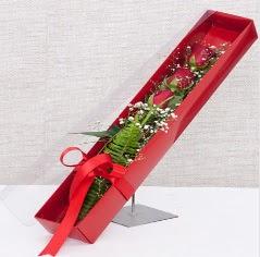 Kutu içerisinde 3 adet kırmızı gül  Amasya online çiçek gönderme sipariş