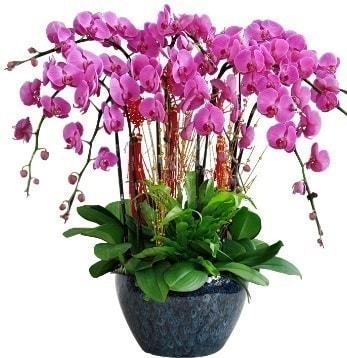 9 dallı mor orkide  Amasya 14 şubat sevgililer günü çiçek