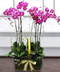 4 dallı mor orkide  Amasya güvenli kaliteli hızlı çiçek
