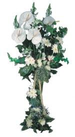 Amasya çiçek mağazası , çiçekçi adresleri  antoryumlarin büyüsü özel