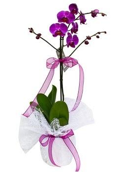 Tek dallı mor orkide  Amasya çiçekçi telefonları