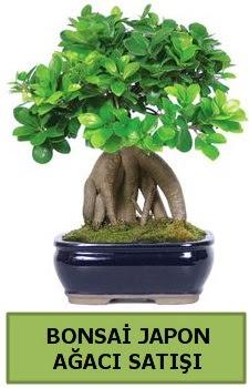 Bonsai japon ağacı satışı  Amasya çiçek satışı