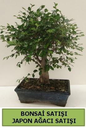 Minyatür bonsai japon ağacı satışı  Amasya çiçek gönderme sitemiz güvenlidir