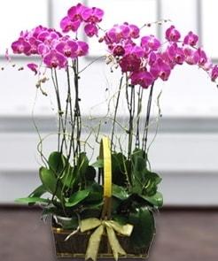 7 dallı mor lila orkide  Amasya çiçek gönderme sitemiz güvenlidir