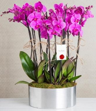 11 dallı mor orkide metal vazoda  Amasya çiçek gönderme sitemiz güvenlidir